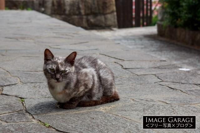 こちらを見つめる尾道の猫のフリー写真素材(無料)