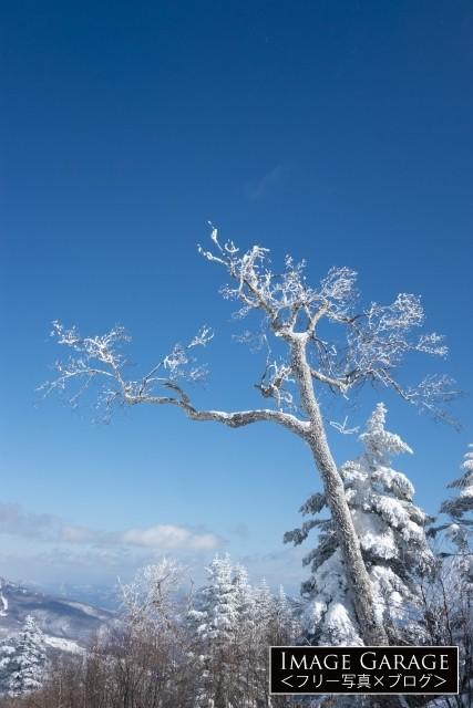青空に向かって伸びる雪が降りかかった木のフリー写真素材