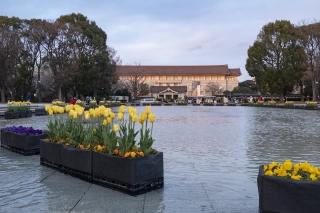 上野恩賜公園・竹の台広場のアイスチューリップ