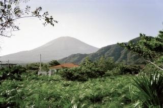 八丈島のフェニックスロベリニー畑