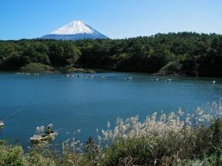精進湖のヘラブナ釣りと富士山