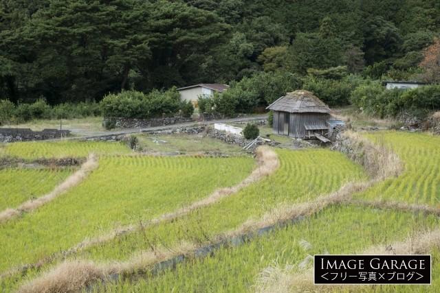 伊豆・戸田にある北山の棚田のフリー写真素材