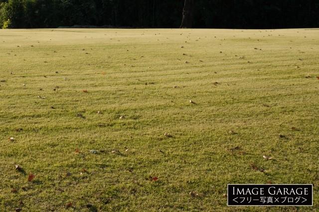 秋の芝生のフリー画像(無料写真素材)