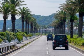 フェニックスが立ち並ぶ馬堀海岸の道路
