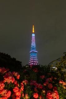 5月空色の東京タワーとバラ