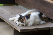 外でお昼寝するモフモフの猫