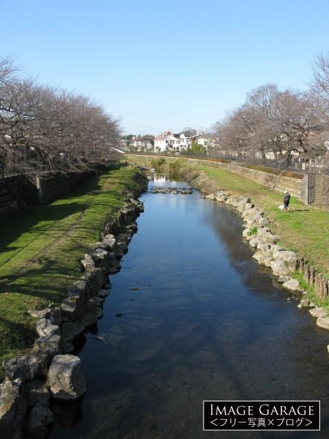 野川(中耕地橋より)のフリー画像(無料写真素材)