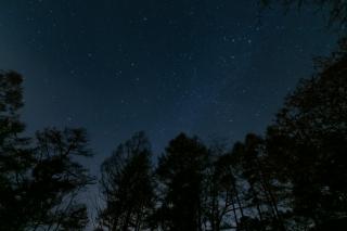 森の上の星空