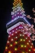 新緑色(4月)の東京タワーと桜のコラボ