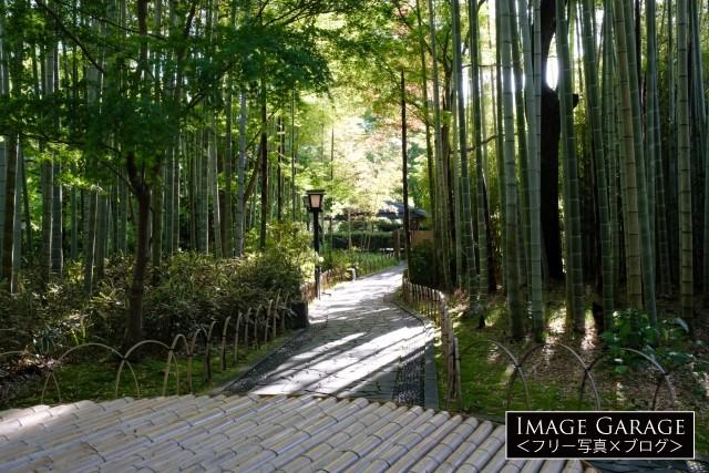 早朝の竹林の小径(横)のフリー写真素材(無料画像)