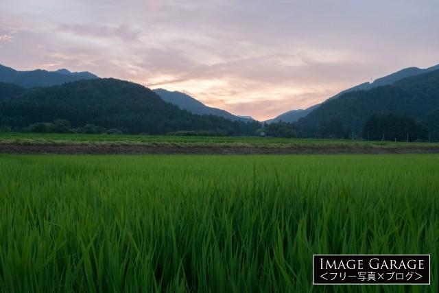 福島県の水田と山なみのフリー写真素材(無料画像)