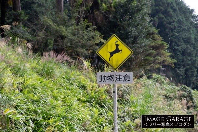 動物注意の道路標識(シカ)のフリー写真素材(無料画像)