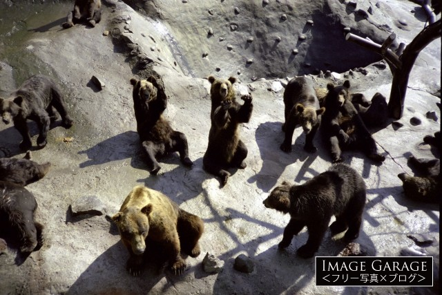 のぼりべつクマ牧場のフリー画像(無料写真素材)